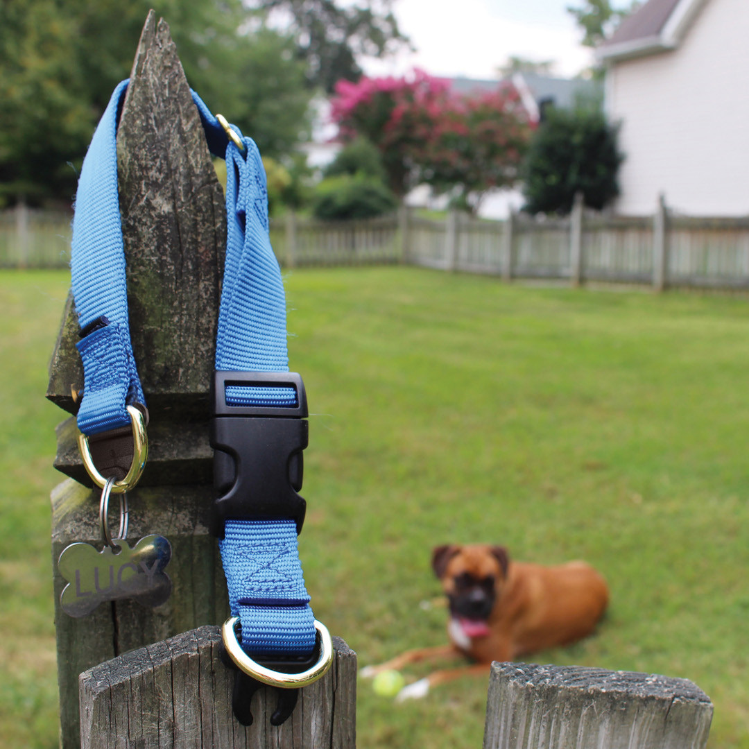 collar-on-fence-with-Boxer